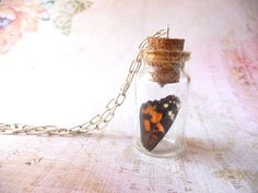 Butterfly wing in glass jar necklace hand raised by DreamofaDream