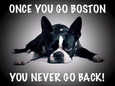 I love my Boston!