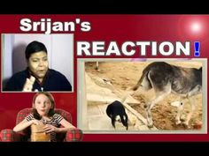 TRY NOT TO LAUGH OR GRIN WHILE WATCH THIS CHALLENGE Animals Edition REAC...