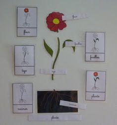 Crapouillotage: cartes nomenclatures