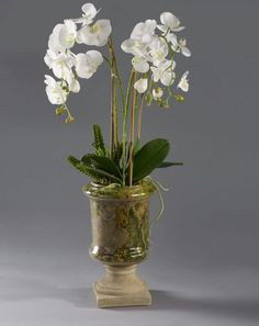 White Orchid Phalaenopsis Plants Arrangement in Glass Urn wi Artificial Orchids, Artificial Flower Arrangements, White Orchids, Urn, Glass Vase, Plants, Handmade, Beautiful, Home Decor
