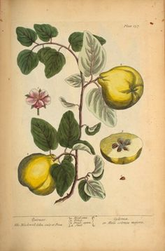 Turn the Pages of a Rare Book on Medicinal Plants from the NLM ...