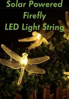 Purchase Solar Powered FIREFLY LED Light String 30 Lights In 8 Modes from Vista Shops on OpenSky. Share and compare all Lighting in Home. Solar String Lights, Light String, Solar Garden Lanterns, Organic Gardening Catalogue, Solar Light Crafts, Beauty Science, Garden Figurines, Backyard Lighting, Upcycled Crafts