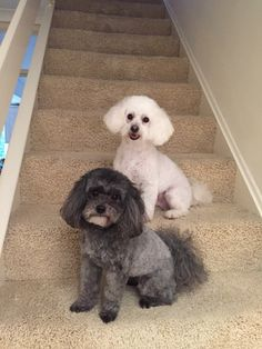 Our new haircuts