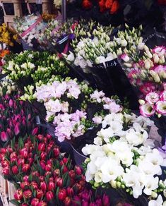 Flowers - Kings Road, Chelsea UK Pretty Flowers, Lifestyle Blog, Bloom, Beauty, Flowers, Beleza, Beautiful Flowers, Cosmetology
