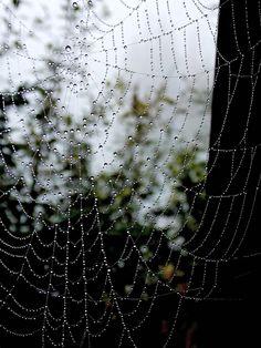 Cobweb, web with raindrops. High Tatras, Rain Drops, Places, Lugares