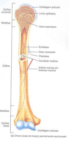 Aula de Anatomia | Sistema Esquelético