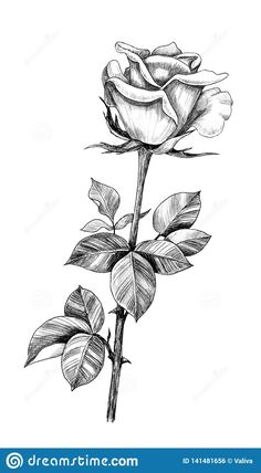 Rose Petals Drawing, Cute Flower Drawing, Rose With Stem Drawing, Floral Drawing, Flower Art, Rose Stem Tattoo, Rose Drawing Tattoo, Skull Rose Tattoos, Flower Tattoos