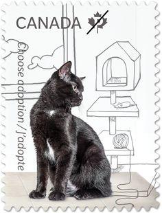 Canadian Stamp - Choose Adoption - Black cat