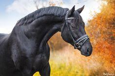 Tips bij paardenfotografie