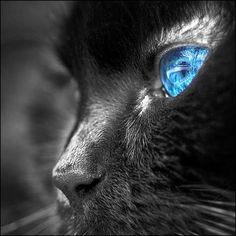 Hermosos ojos azules♥️
