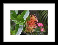 mexican honeysuckle, orange, flower, bloom, blossom, naples botanical garden, michiale schneider photography