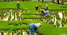 Find agriculture and rural development Conferences, training, seminars, and workshops in Nigeria, Africa, Asia, North/South America, Europe and Oceania....HERE