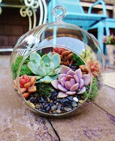 Gardening Autumn - Terrarium pour plantes – tuto pour le faire et plus de 70 super modèles - With the arrival of rains and falling temperatures autumn is a perfect opportunity to make new plantations Decor Terrarium, Air Plant Terrarium, Plant Night, Indoor Garden, Home And Garden, Indoor Herbs, Miniature Greenhouse, Cactus Plante, Decoration Plante