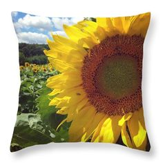 Sunflower Throw Pillow featuring the photograph Sunflower Field by Cassie Peters