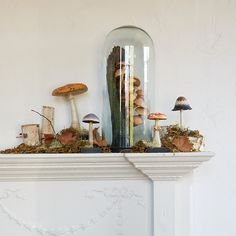 An ornate and elegant curio for the home, this colorful mushroom is hand-cast from resin and rests atop a distressed, wooden base. | curiosities, display, fungi, colors, specimens, #wishlist