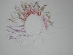 Colored Pencil tutorial by Sally Franklin ~ Posted on Fine Art Tips