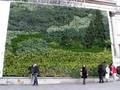 "National Gallery's Van Gogh Vertical Garden. It's a vertical garden sponsored by General Electric that mimics Vincent van Gogh's ""A Wheatfield, with Cypresses,"" using 8,000 living plants of more than 26 varieties."