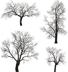 Walnut and chestnut trees vector on VectorStock®
