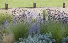 Plants include grasses miscanthus, stipa, and festuca, as well as flowering plants verbena and euphorbia