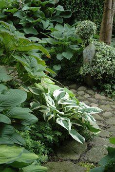 hostas border a stone pathway...HAVETID: En sang om sommer.