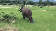 "didn't know i needed a baby elephant playing with a ribbon … ""Check out my sweet moves!"" 