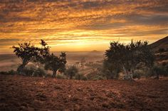 Olivos al amanecer by Wilhem  on 500px