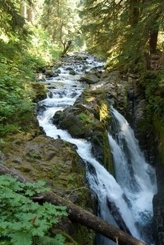 Sol Duc Falls, Olympic Peninsula, WA state. Stop in Squim for some lavender tea at Purple Haze Farm.