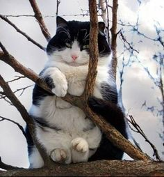 Cansei de ser gato. Sou uma coruja.