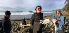 citizen science project monitoring dead seabirds