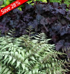 Deer resistant shade plants for 5 months of color!