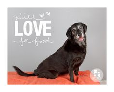Senior Allie Bea is up for adoption from The Old Dog House  http://www.theolddoghouse.org/animals/  Photo © City Dog Photography