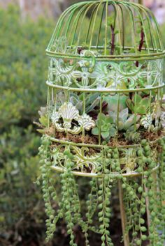 How to plant succulents in a birdcage. I have the perfect one to use too!