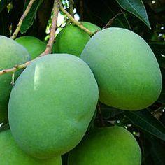 arroz de camarão simples Receitas В нашем блоге гораздо больше информации Mango Fruit, Mango Tree, Fresh Fruit, Exotic Fruit, Tropical Fruits, Comida Filipina, Buy Trees Online, Plum Tree, Fruit Photography