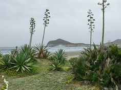 [Playa de los Genoveses-Cabo de Gata photo F. Nestares http://www.panoramio.com/user/602664]  ...