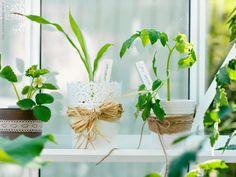 greenhouse/conservatory idea