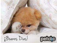 Fotos divertidas de animales #perro #cachorro