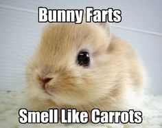 ♥ what's invisible and smells like carrots?  .....  bunny farts!
