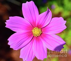 Fine art prints, cards, T-shirts, bags, phone cases, pillows - more.