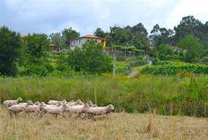 Quinta do Olival - Turismo em Espaço Rural