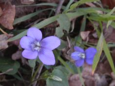Flores em Março