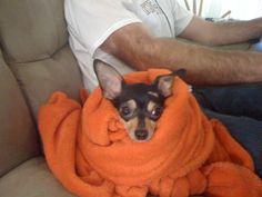 he loves his orange blankie!