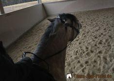 Wenn Pferde beim Reiten giften