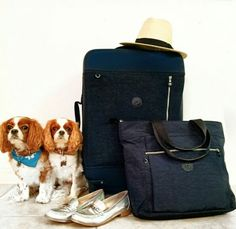 9bf592e5291 Let's go! Kipling Monkey, Obsessed With Me, Luggage Sets, King Charles  Spaniel