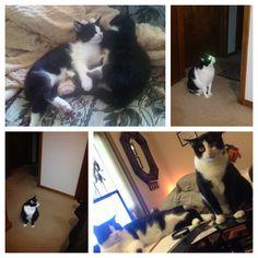Muy Cats are amazing,  they guard my halls my room cheer each others and encorage me to work with a big smile on my  face  too.~~mis Gatos son maravillosos, ellos cuidan mis pasillos, mi habitación, se animan el uno al otro y me animan a trabajar con una bella sonrisa  también