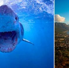 5 Killer Adventure Travel Experiences in Cape Town, South Africa