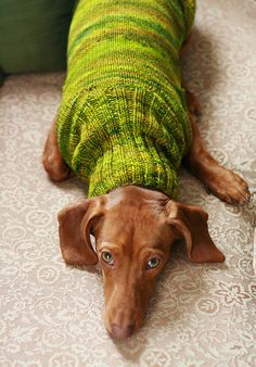 Knitting pattern that takes into account the unique physique of the weenie dogs. Buy it and the proceeds go to MARL (Michigan Animal Rescue League.