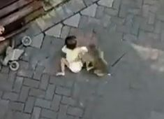 Monkey tries to kidnap a child Three Kids, Monkey, Children, Humor, Young Children, Jumpsuit, Boys, Kids, Monkeys