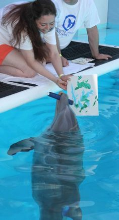 Hope paints us a picture (which we have!) Hope the Dolphin - from the movie Dolphin Tale 2 at Clearwater Marine Hospital