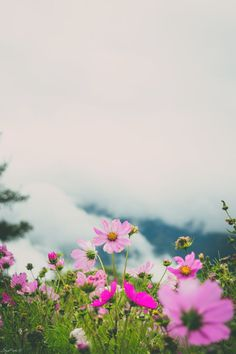 Flowers & Clouds